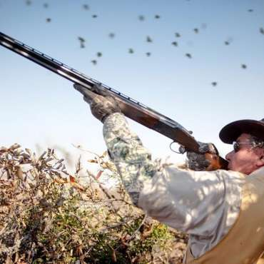 Calling all Dove Hunters! ASC's Dove Towers are back open.